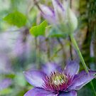 Clematis by Rebecca Cozart