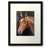 Classique, Anglo-Arab Mare Framed Print