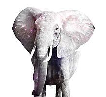 Swag Elephant #1 by FunkLyke