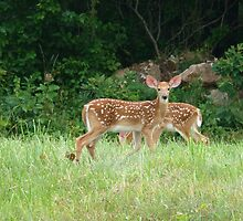 Fawns~ by virginian