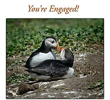 Puffin Love - You're Engaged Photographic Print