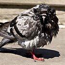 """Angry bird"" by MarekM"