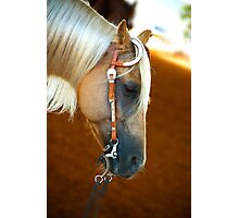 Horse head portrait Photographic Print