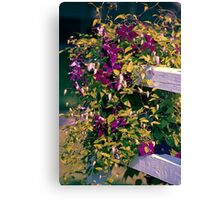 Clematis On A Corner Fence Canvas Print