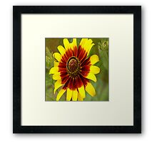 Flower Sunburst Framed Print