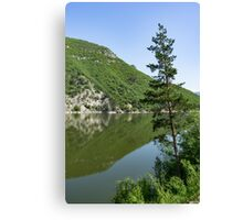 Lean In - a Lone Pine on the Lake Shore Canvas Print