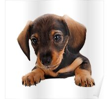 Cute puppy! Sale! Poster