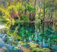 Korran Bitter Springs by Chris Brunton