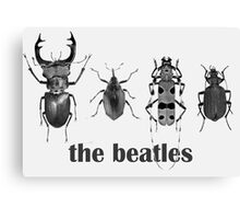 the beatles coleoptera Canvas Print