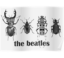 the beatles coleoptera Poster