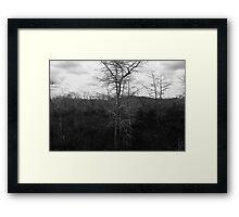 Winter Cypress Trees Framed Print