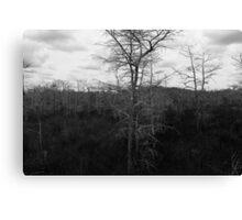 Winter Cypress Trees Canvas Print
