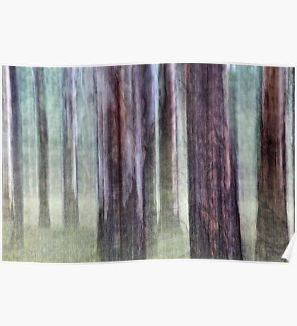 Eucalyptus impression # 2 Poster