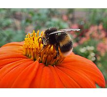 Babbitty Bumble Photographic Print