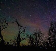 Aurora Starscape Cosmos Over Burnt Forest  by Gavin Heffernan