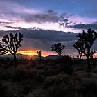 Amazing Sunset Sunrise over Joshua Tree Park by Gavin Heffernan