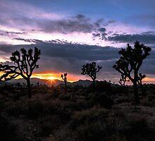 Amazing Sunset Sunrise over Joshua Tree Park by Gavin Heffernan