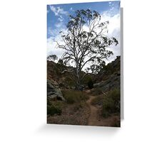 Majestic Tree.  Mannum.  South Australia. Greeting Card