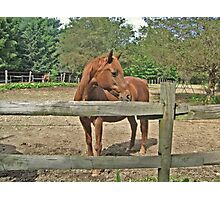 Fortune By The Fence Photographic Print