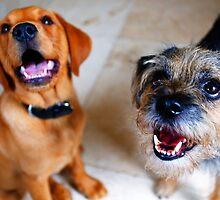 BEST FRIENDS OLLIE AND LULU by leonie7