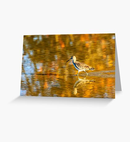 Sandpiper at Bunche Beach Preserve Greeting Card