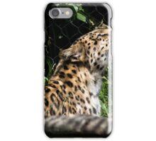 Amur Leopard - Pittsburgh Zoo iPhone Case/Skin