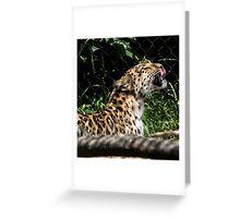 Amur Leopard - Pittsburgh Zoo Greeting Card