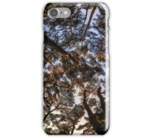 Pine Tree Forest iPhone Case/Skin