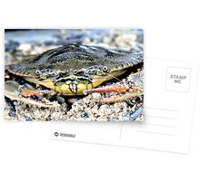 Blue Claw Crab in the Sand Postcards