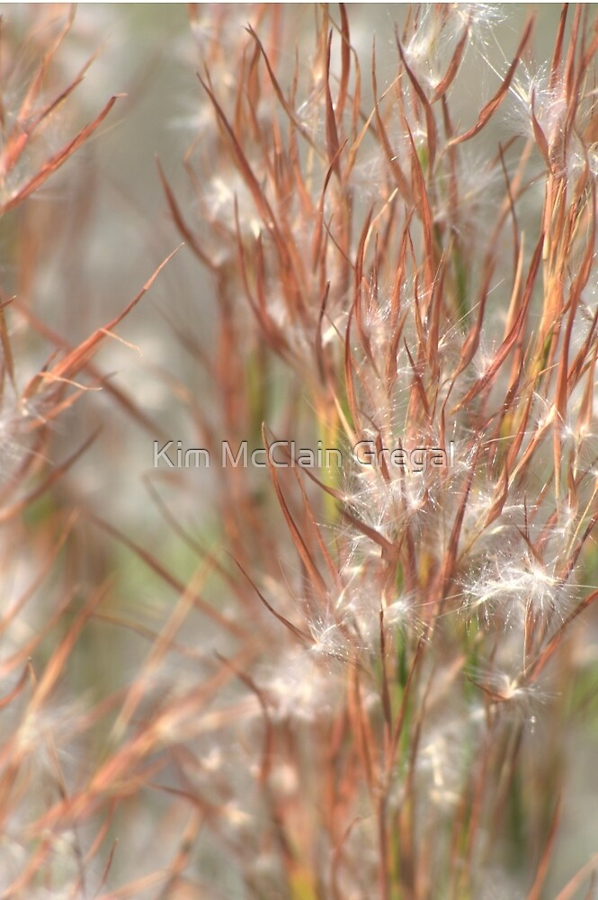 Seeds by Kim McClain Gregal