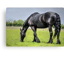 Black Horse (2) Canvas Print