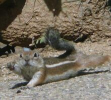 Antelope Squirrel Waving Sticker