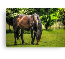 Horse in Field (4) Canvas Print