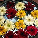 Kathmandu Flowers by John Dalkin