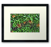 Fire Blossoms Framed Print