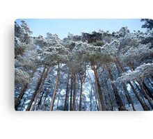 Winter pine trees Canvas Print
