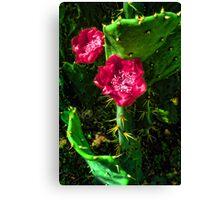 Magenta Flower Cactus Blossoms Canvas Print