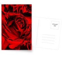 Red for the Holidays Postcards