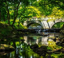 Summer Reflections 3 by aaronchoi