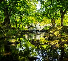 Summer Reflections 4 by aaronchoi