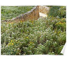 Gozitan Wildflowers Poster