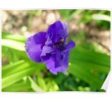 Purple Flower & Insect Poster