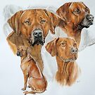 Rhodesian Ridgeback /Ghost by BarbBarcikKeith