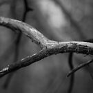 Branch #5436-20140530 by Philip Werner