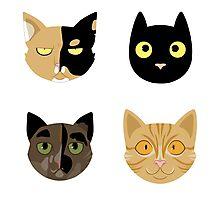 Kitties Photographic Print