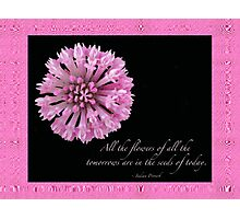The Flowers Of Tomorrow - Pink Clover With Quote Photographic Print