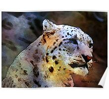 Mostly White:  Snow Leopard Poster