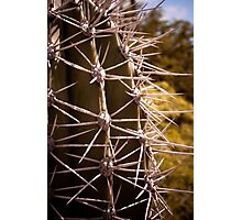 Prickled Photographic Print