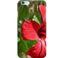 Arabic gardens iPhone Case/Skin