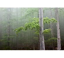 The mysterious forest Photographic Print